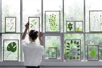 cadre herbier