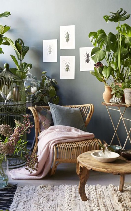 fauteuil en rotin déco plantes