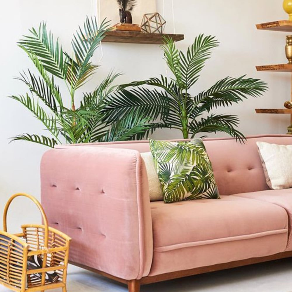 plantes salon canapé rose