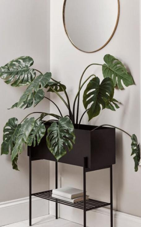 décoration minimaliste plante